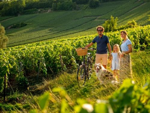 La Marne, votre prochaine expérience en Champagne