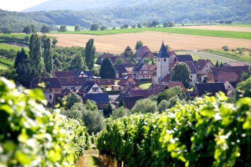 Sur la route des vins biologiques d'Alsace