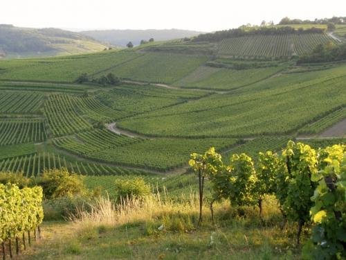 Randonnées dans la Région de Molsheim-Mutzig