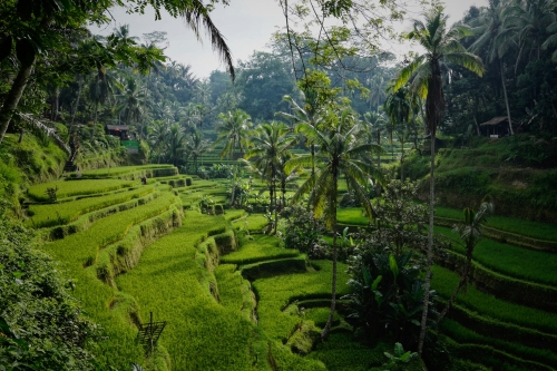 Les merveilles de Bali !